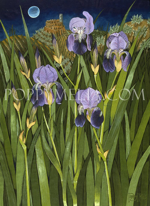 Purple Iris in Tuscany