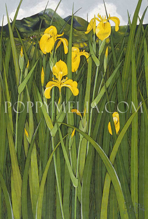 Yellow Iris in Kerry Painting by Poppy Melia